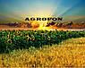 Семена подсолнечника НСХ 6749 технология ГРАНСТАР/СУМО, фото 3