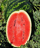 Семена арбуза Ливия  F1  овальный  10 шт.  Clause, фото 2