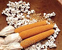 Кукурудза для Поп корну (ПОП КОРН)