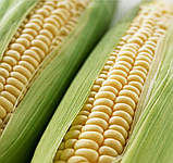 Оверленд F1 20 шт семена кукурузы Syngenta Голландия, фото 2