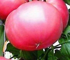 Насіння томатів Славський рожевий, фото 2