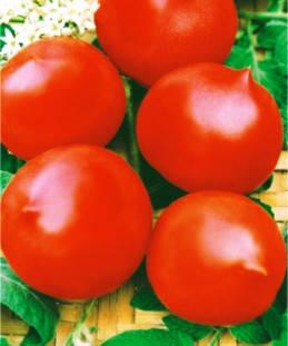 Насіння томатів Гібрид-2 Тарасенко, фото 2