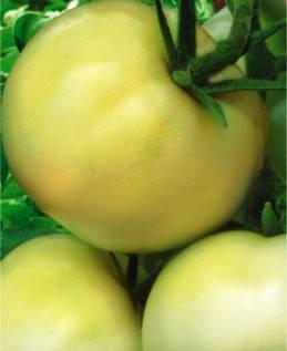 Насіння томатів Білий гігант, фото 2