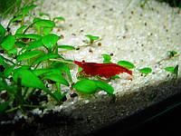 Услуги аквариумиста