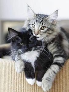 Сколько живут коты: дворняги и домашние