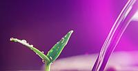 Фитолампы фитосветильники светодиодные Led для растений