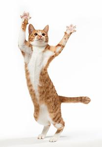 Что делать, если не удается приучить кота к когтеточке