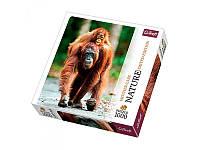 "Пазлы Nature ""Орангутан. Индонезия"" Trefl 10514, 1000 деталей"