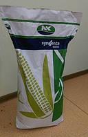 Семена кукурузы Сингента НК Пако (Syngenta NK Pako)