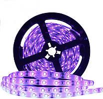 Dilux - Світлодіодна стрічка UV SMD 5050 60LED/m, IP20, ультрафіолетова