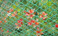 Сетка пластиковая (ромб) 1,5*10м (ячейка 30*30мм) зелёный, фото 1