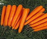 Семена моркови Лагуна F1 400 шт. 1,80-2,00 фракция Nunhems, фото 2