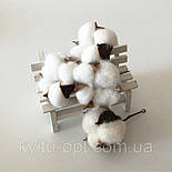 Голова натурального  сушеного цветка  хлопка, фото 3