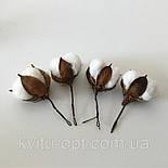 Голова натурального  сушеного цветка  хлопка, фото 2
