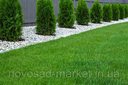 Как правильно сеять газонную траву?
