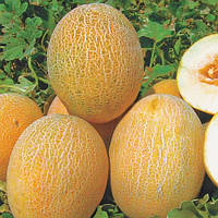 Семена дыни Анамакс (1000 шт)