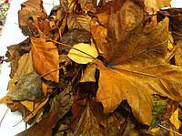 Вывоз листьев Киев,вывоз листвы(044)222-91-13
