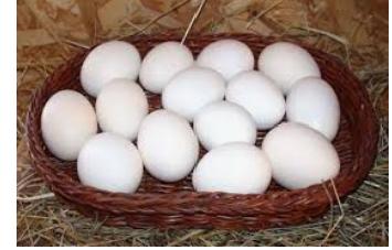 Легорн инкубационное яйцо