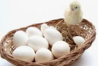 Инкубационное яйцо Хайсек вайт