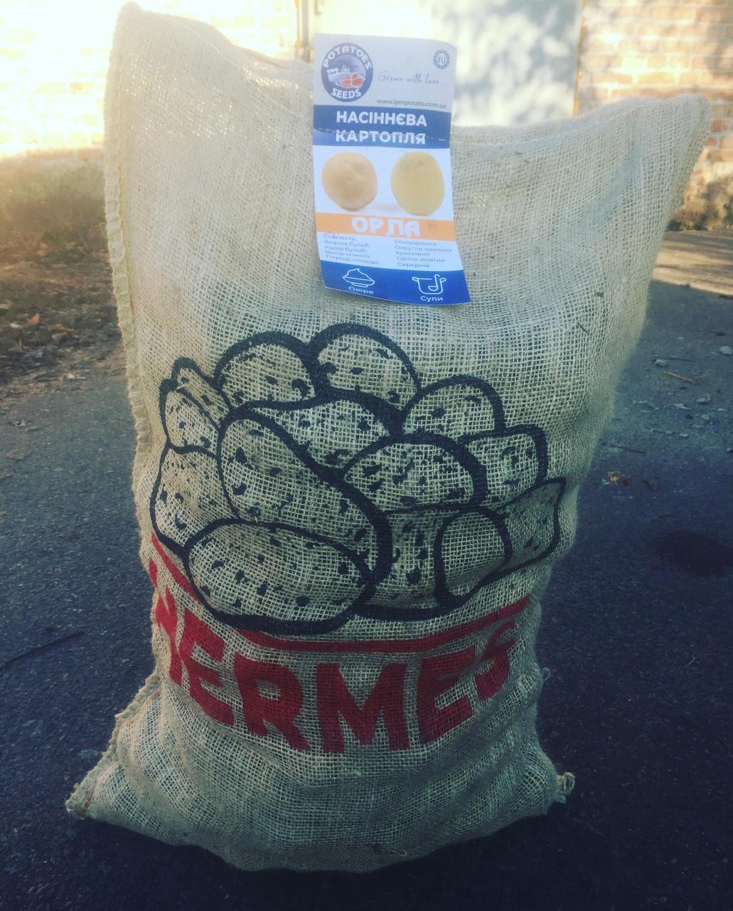 Семенной картофель сорт ORLA  (мешок 25 кг)
