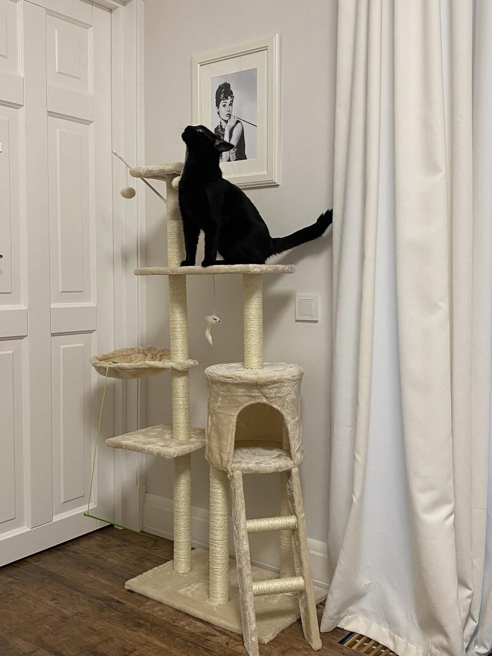 Когтеточка, будиночки, дряпка для кішок 138см