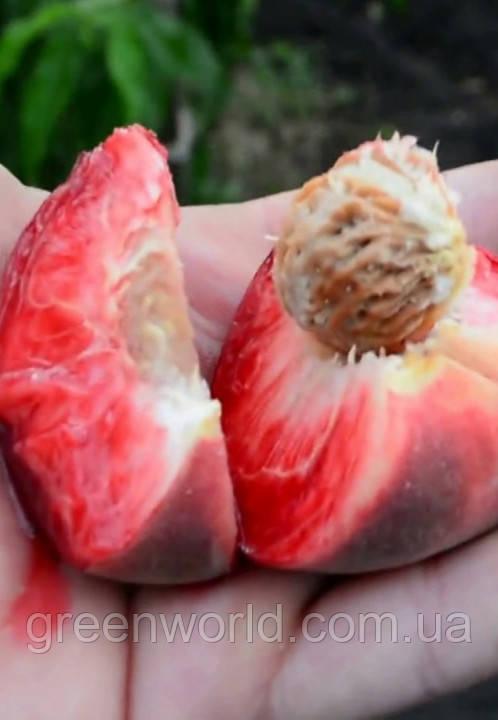 Саджанці персика Ред Робін (приймаємо замовлення на осінь 2021)