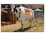 Маркер карандаш для маркировки животных, цветные RAIDEX (Германия), фото 2