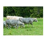 Маркер карандаш для маркировки животных, цветные RAIDEX (Германия), фото 3