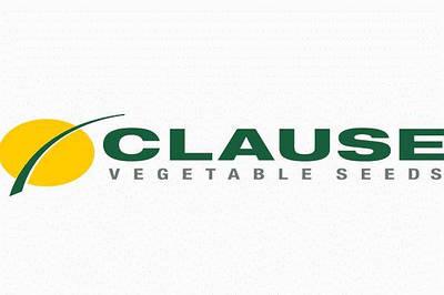 Семена CLAUSE (Франция)