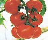 Семена томата Кристал F1 10 шт.  индетерминантный Clause, фото 2