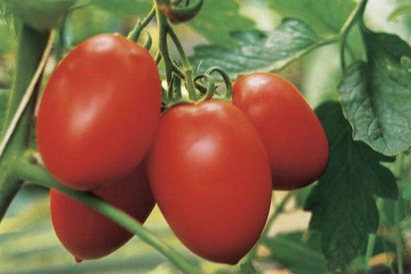 Семена томата Колибри F1 10 шт. индетерминантный Clause