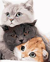 """Картина по номерам """"Кошачье трио"""" 40*50см, фото 1"""