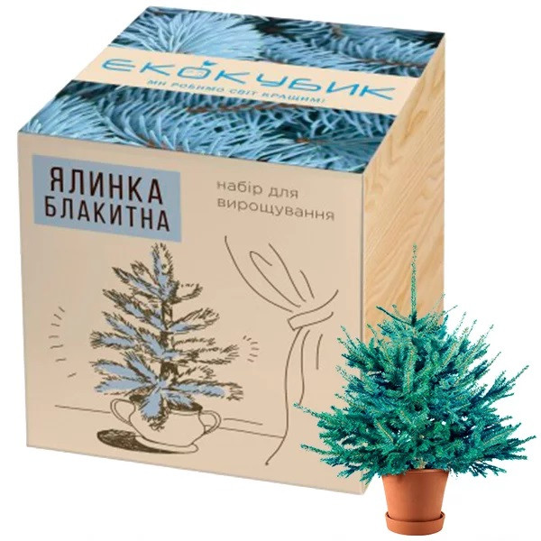 Экокуб Голубая ель (набор для выращивания)