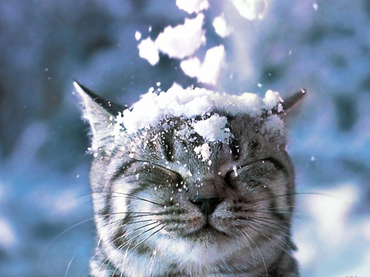 """Картина на стекле """"Кот и снег"""""""