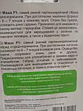 Насіння огірків ранній гібрид корнішон самозапильний Маша F1 10 насінин Seminis Голландія, фото 2