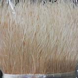 Пір'яна тасьма страусина. Колір Бежевий. Перо 10-15см. Ціна за 0,5 м., фото 3