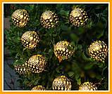 Гирлянда светодиодная Шарик Золотой Нить 20 LED Диодов, фото 4