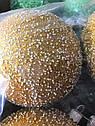 Елочные Шары с Блестками и Пенопластом Однотонные 6 см  на Елку Цвета в Ассортименте 6 шт в sale, фото 2