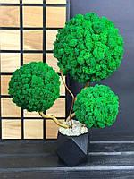 Декоративное Дерево с 3-мя кронами из стабилизированного мха для дома офиса Оригинальный корпоративный подарок