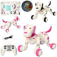 Интерактивная собака робот на радиоуправлении 777-338