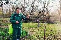 Зачем нужен опрыскиватель для деревьев