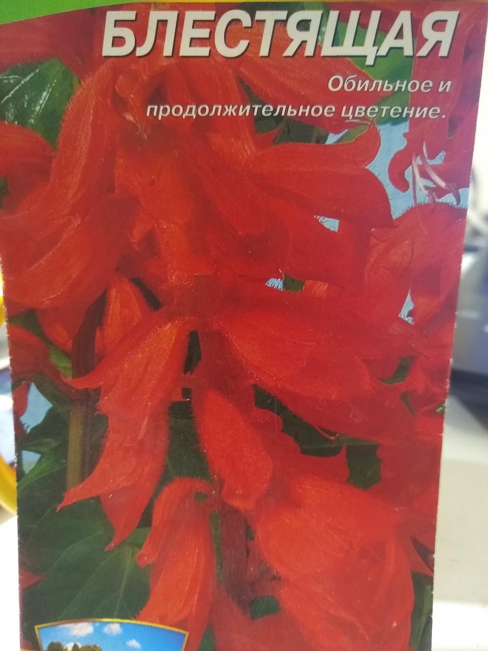 Семена Сальвии блестящей ранней красной 5 грамм 2000 семян Украина