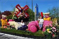Оптовые поставки   луковиц, клубней и саженцев цветов из Голландии  на весну 2016г.