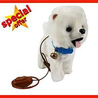 Мягкая игрушка Собачка Шпиц Chi-Chi Love на поводке