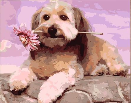 Картина по номерам Лохматый друг» 40*50см, в коробке Dreamtoys код: DT-1328