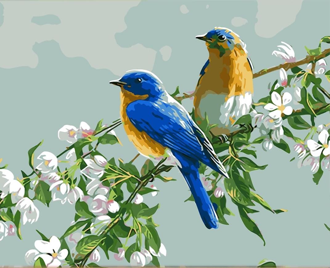 Картина по номерам Птицы на цветущей ветке» 40*50 см, в коробке Dreamtoys код: DT-788