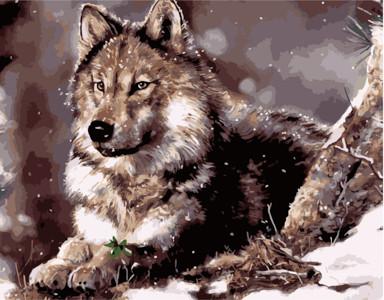 Картина по номерам Волк, в термопакете 40*50см Стратег код: VA-0335