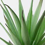 FEJKA ФЕЙКА Штучна рослина в горщику - для приміщення/вулиці Сукулент - IKEA, фото 4