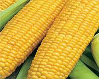 Гибрид кукурузы Любава 279МВ