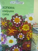 Семена однолетней Георгины Веселые ребята 0,1 грамм семян Украина